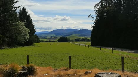 New-Zealand-Landscape-With-Sheep