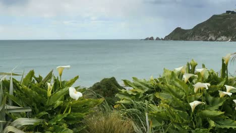 New-Zealand-Lilies-With-Nugget-Point-Pan