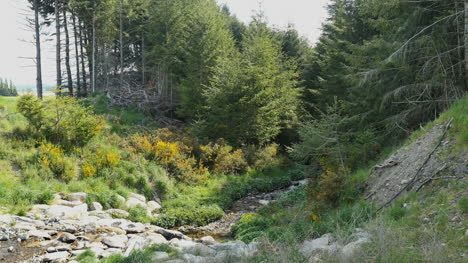New-Zealand-Stream-Bed