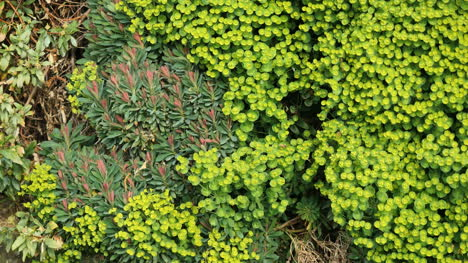 New-Zealand-Vegetation-Patterns