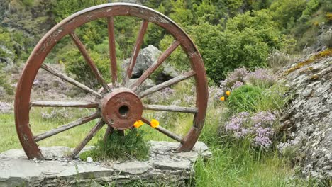 New-Zealand-Wagon-Wheel-And-Poppies