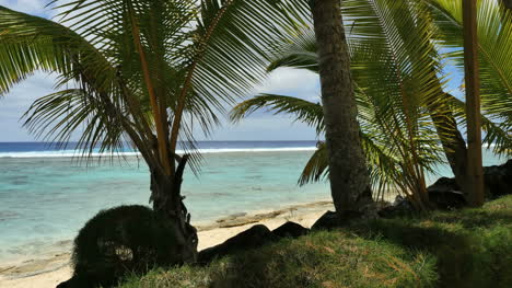 Rarotonga-Rocks-And-Palms-In-A-Row-With-Reef