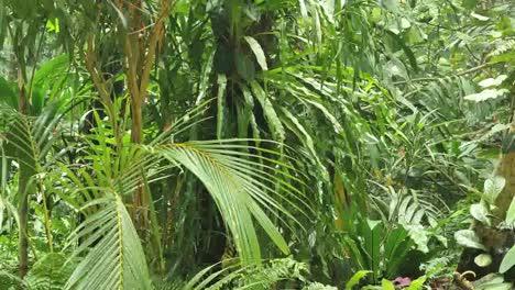 Vanuatu-Palms-And-Ferns