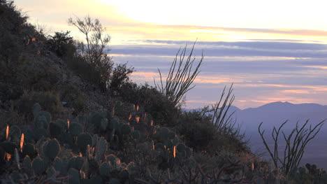 Arizona-Ocotillo-In-Evening