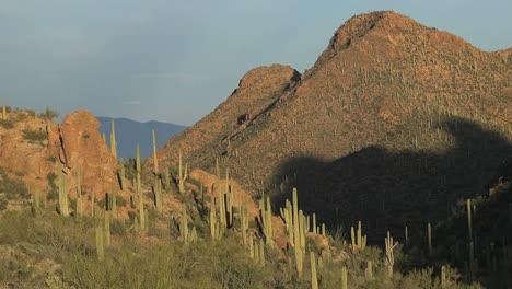 Arizona-Tucson-Mountain-Hill-With-Saguaros-Pan