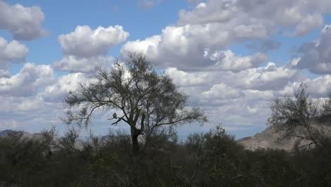 Arizona-Desert-Landscape-Zooms