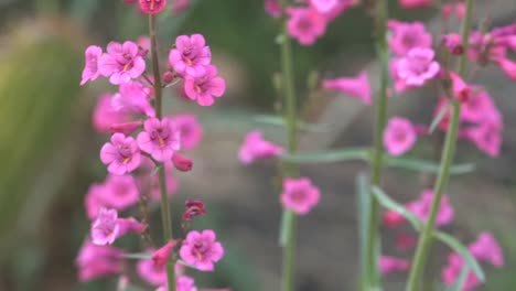 Arizona-Hummingbird-And-Flowers