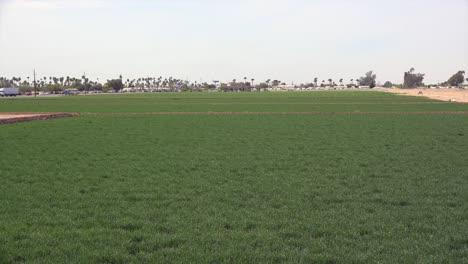Arizona-Irrigated-Crops-At-Yuma