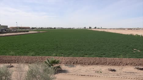 Arizona-Irrigated-Field-At-Yuma