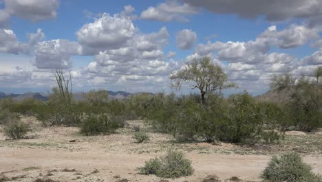 Arizona-Landscape-Shrubs-And-Bare-Ground