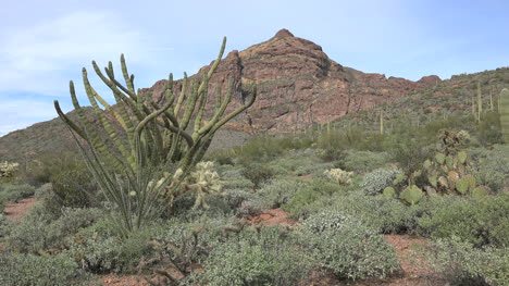 Paisaje-De-Arizona-Con-Cactus-Organ-Pipe