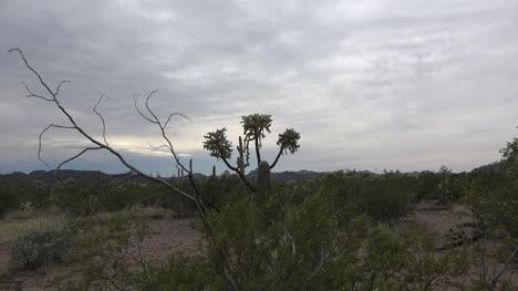 Arizona-Zooms-On-Chain-Cholla