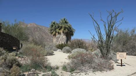 California-Anza-Borrego-Desert-Plants