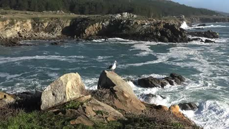 California-Gerstle-Cove-Waves-And-View-Salt-Point-Short-But-Good-Zoom-In