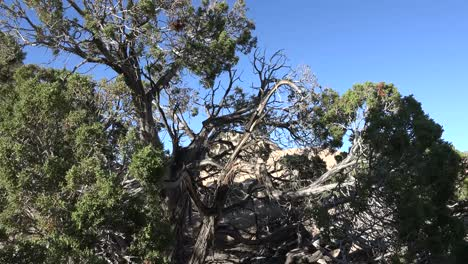 Parque-Nacional-Joshua-Tree-De-California-Nudoso-árbol