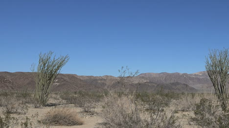 California-Joshua-Tree-Tres-Ocotillo-Pan
