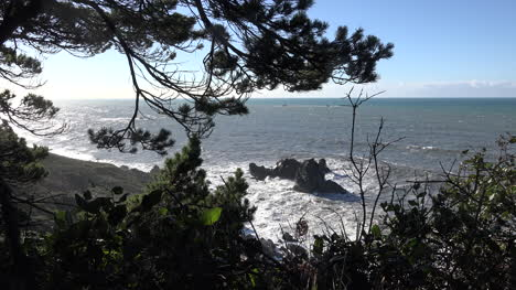 California-Patricks-Point-Best-Rocks-Waves-And-Tree-Branches