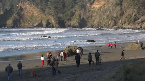 California-Trinidad-People-And-Dogs-On-The-Town-Beach-Pan