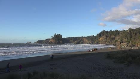 California-Trinidad-Town-Beach-With-Running-Dog