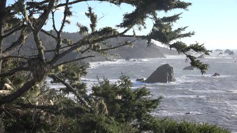 California-Tree-And-Coast-At-Patricks-Point