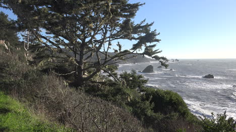 California-Tree-And-Coastal-Rocks-Patricks-Point
