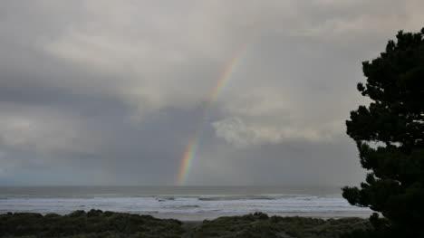 Oregon-Rainbow-Past-Tree-Over-Sea