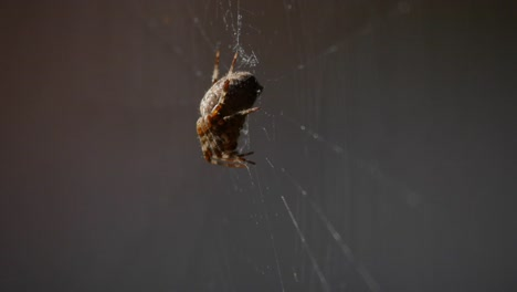 Spider-A-Side-View