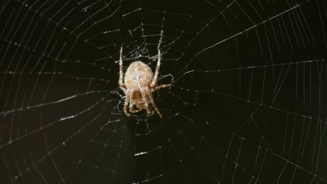 Spider-On-Web-Comes-Into-Focus