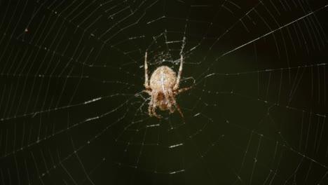 Spider-On-Web