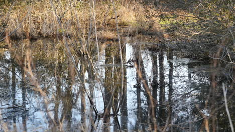 Virginia-Reflections-In-Marshy-Water