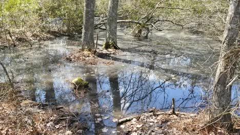 Virginia-Reflections-In-Swampy-Water