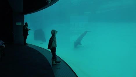 Aquarium-Boy-And-Dolphin