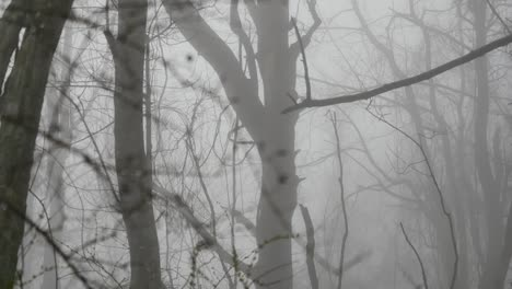 Branch-In-Fog-Comes-Into-Focus