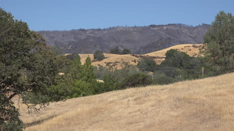 California-Hilly-Landscape-Of-Grass-And-Trees-With-Burned-Area-Beyond