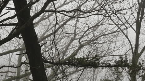 Foggy-View-Through-Branches
