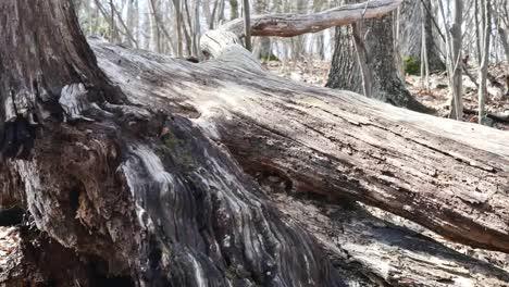 Handheld-Pattern-In-Fallen-Trees