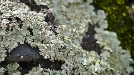 Lichen-Coming-Into-Focus