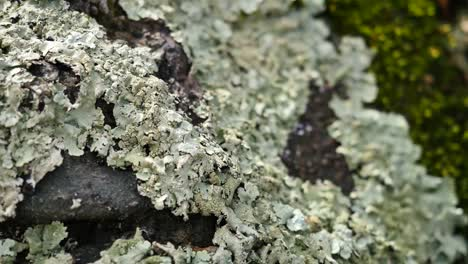 Lichens-On-A-Piece-Of-Wood