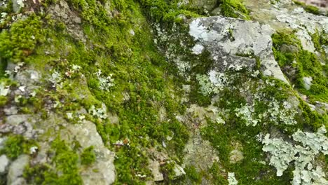 Movement-Across-Moss-And-Lichens