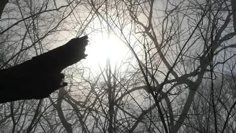 Movement-Across-Sun-In-Woods