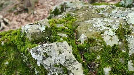 Moves-Back-From-Mossy-Rock