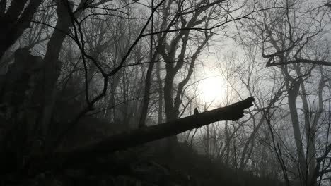 Mysterious-Sun-In-Woods