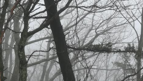 Nature-Branches-In-The-Fog-Pan