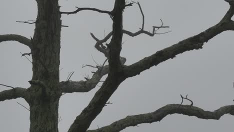 Nature-Detail-Of-Branches-In-Fog-Pan