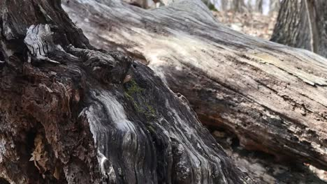 Nature-Fallen-Trees-In-Detail-Pan