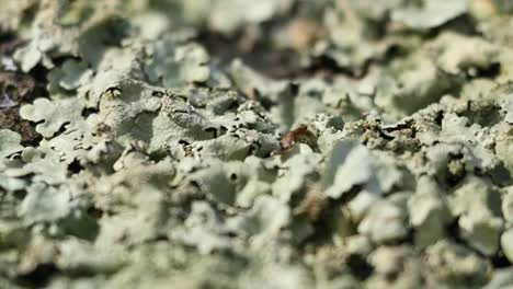 Nature-Texture-And-Lichen-Pan