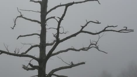 Nature-Tree-On-Foggy-Morning-Tilt
