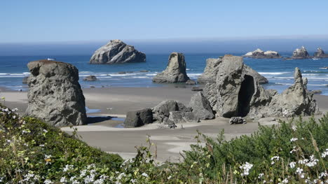 Oregon-Bandon-Flowers-Frame-Beach-View-Zoom-Out