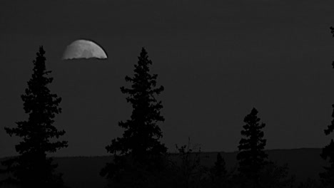 Oregon-Moon-And-Fir-Trees-Pan-And-Zoom