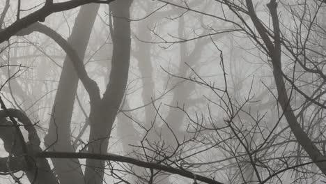 Pans-Across-Limbs-In-Morning-Fog
